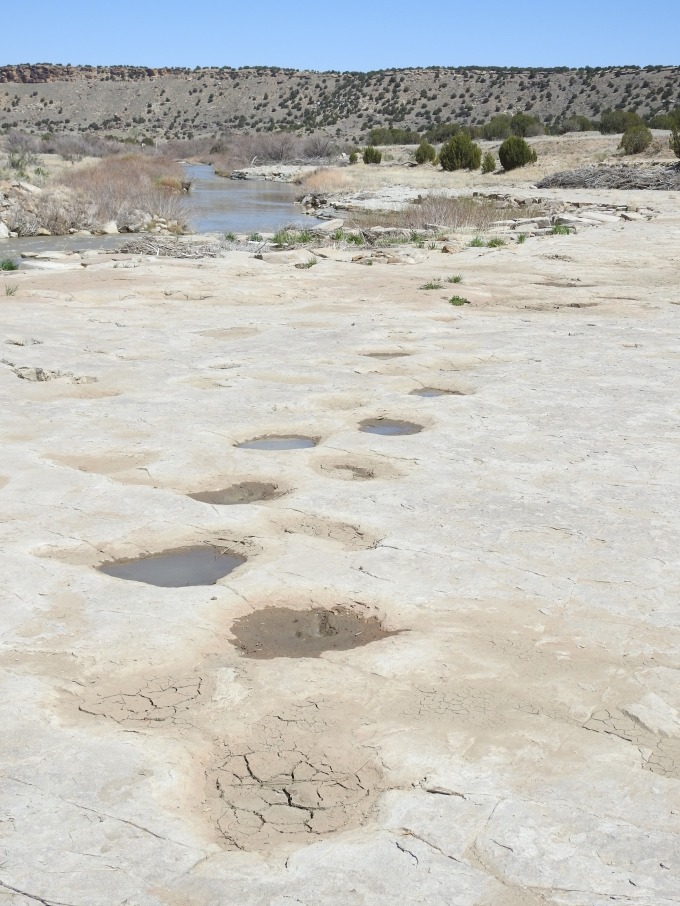 Dinosaur (sauropod) tracks, Picketwire Canyon, Comanche National Grassland, CO